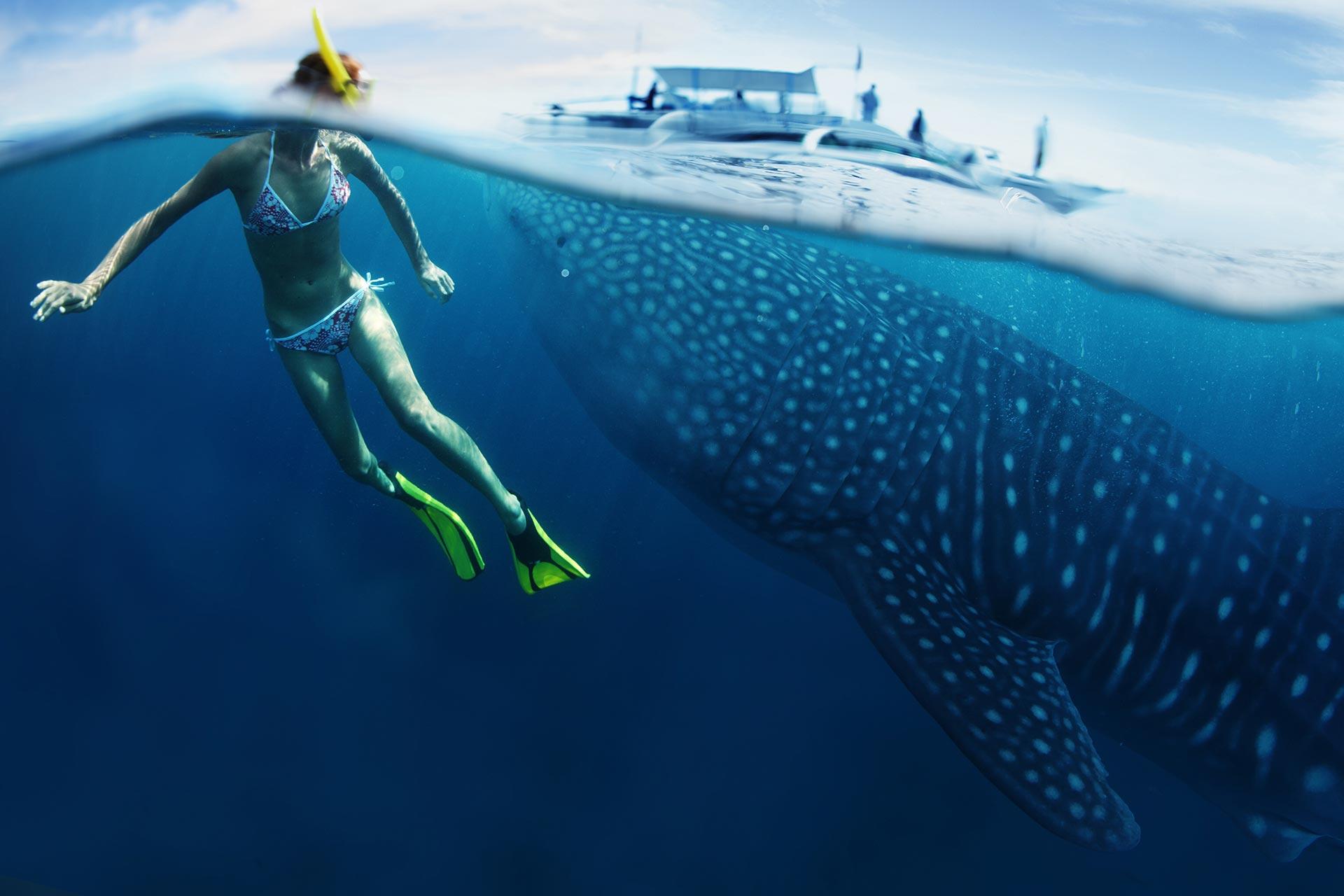 дайвинг, китовая акула, diving, Самуи, дайвинг на Самуи, Таиланд