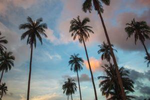SAMUI, palm, sunset, vew, Thailand, Самуи, пальмы, закат, красота, природа