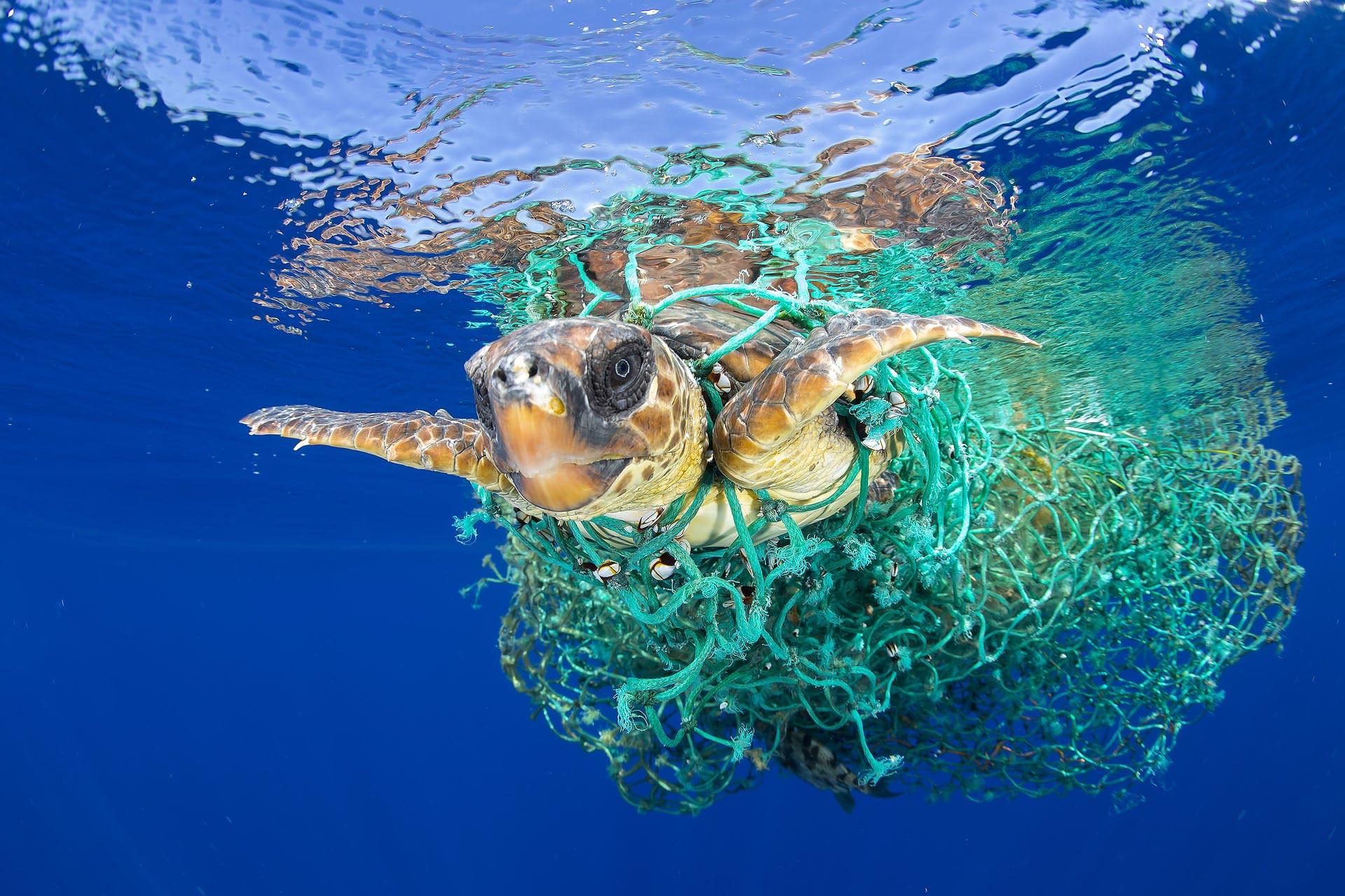 мировой океан загрязнение, отходы, пластик, чистые пляжи, уборка пляжей