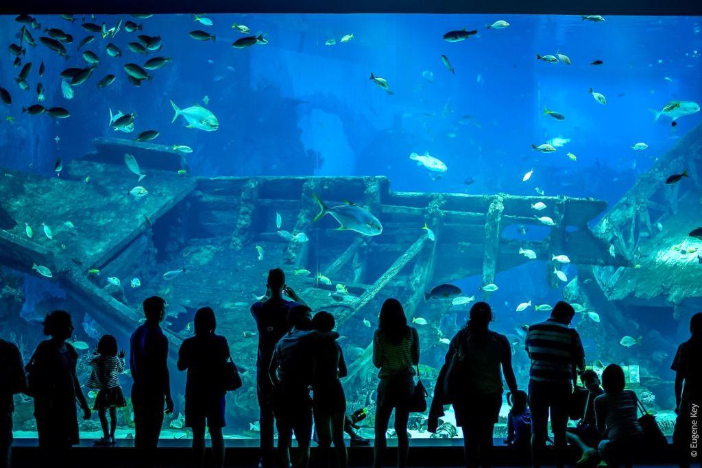 S.E.A. Aquarium, самый большой аквариум в мире, самый большой океанариум, океанариум в Сингапуре, Singapore, Сингапур, достопримечательности Сингапура, что посмотреть в Сингапуре, Сингапур столица, сингапур развлечения, Сентоза Сингапур, парк развлечений в сингапуре, остров сентоза,