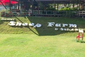Таиланд, Самуи, развлечения на Самуи, Самуи для детей, куда сходить с детьми на Самуи, детская площадка Самуи, овечья ферма, овечья ферма Самуи, кролики, покормить животных, Samui sheep farm