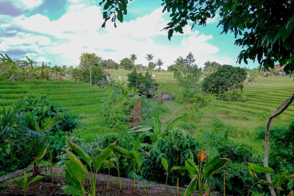 Бали, жилье на Бали, поиск дома на Бали, дом на Бали, аренда дома на Бали, аренда жилья на Бали, аренда виллы на Бали, вилла Бали, отель Бали, снять дом на Бали, сколько стоит жилье на Бали, как найти дом на Бали, как снять комнату на Бали, как снять виллу на Бали, жилой поселок на Бали, отзывы об аренде жилья на Бали, Bali rent house, Гринлот поселок Бали, Гринлот, Greenlot