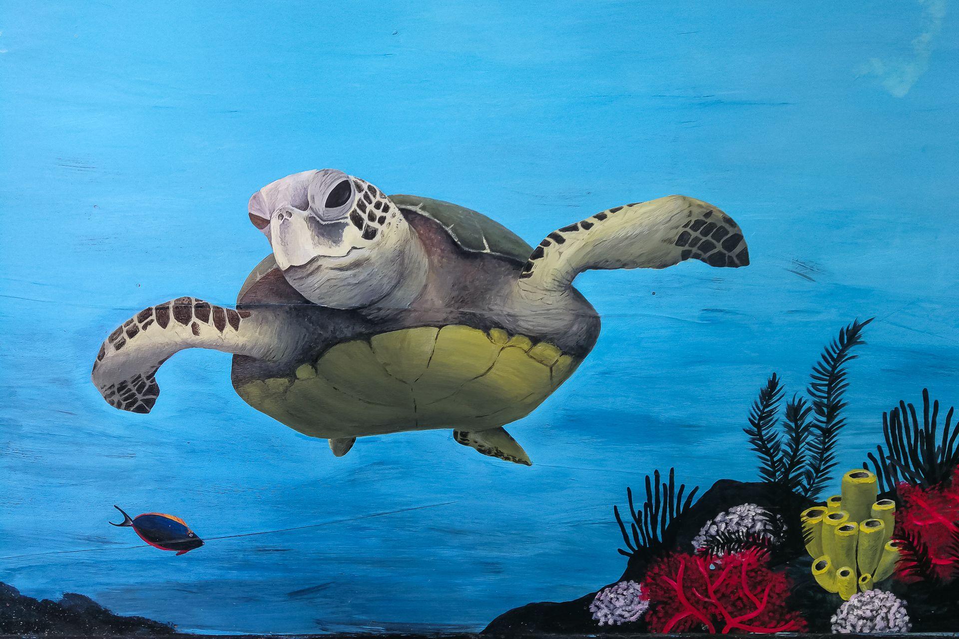 Bali Sea Turtle Society, BSTS, Балийское общество морских черепах, Turtle Conservation And Education Center Bali, TCEC Bali, Bali, turtle, rescuing the sea turtle, Бали, Индонезия, спасение черепах, защита животных, выпуск черепашек в море, токены, маленькие черепашки, baby turtle release, инкубатор черепах, пляж Кута Бали, сохранение вида, морские черепахи, где выпускают черепах на Бали, сезон вылупления черепах на Бали, Сезон гнездования морских черепах