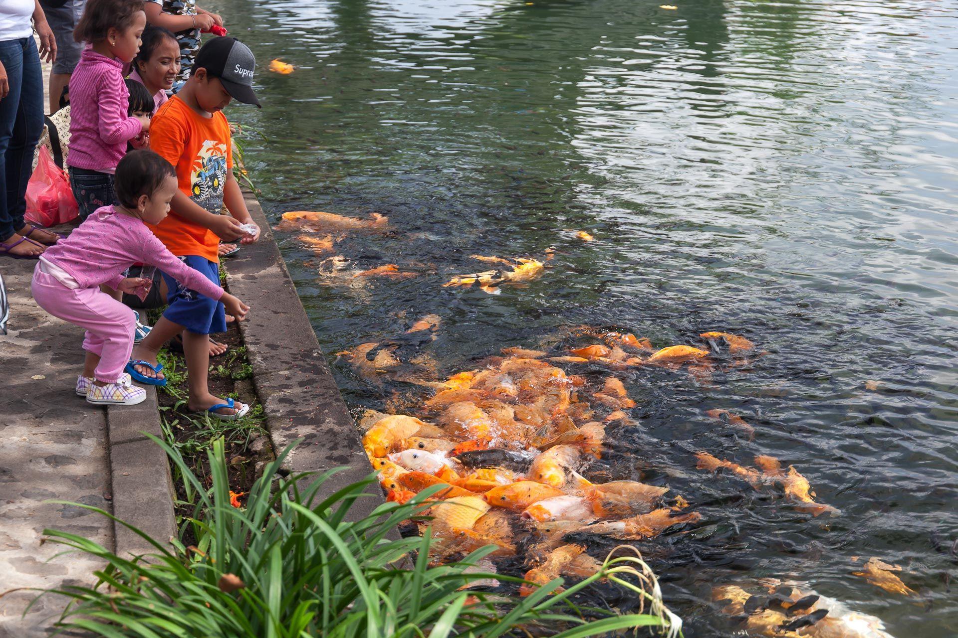 водный дворец на Бали, Тиртаганга, Tirta Gangga, Таман Уджунг, Taman Ujung, водные дворцы на Бали, тирта ганга, ритуал с водой на Бали, ритуал очищения на Бали, святой источник Бали, священная вода Бали, золотые рыбки Бали, где покормить рыб на Бали, куда сходить на Бали, куда сходить с ребенком на Бали, развлечения на Бали, восток Бали, что посмотреть на востоке Бали, что посмотреть в Амеде, Амед Бали, парк на Бали, где погулять на Бали, фотосессия на Бали, интересные места для фото на Бали, фотографии Бали,
