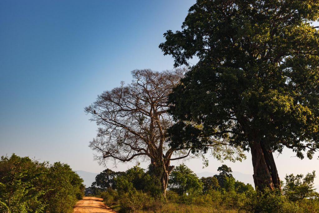 Удавалаве, национальный парк Удавалаве, слоны на Шри-Ланке, питомник слонов Шри-Ланка, где посмотреть слонов на Шри-Ланке, покупать слонов на Шри-Ланке, купание слонов на Шри-Ланке, покормить слонов на Шри-Ланке
